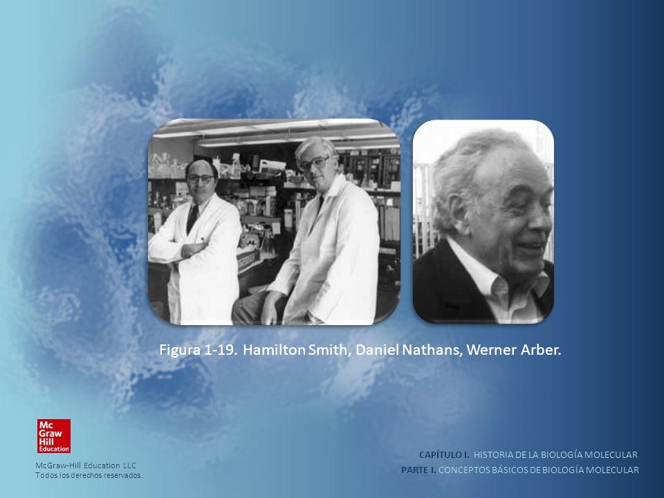 PARTE I. CONCEPTOS BÁSICOS DE BIOLOGÍA MOLECULAR CAPÍTULO I. HISTORIA DE LA BIOLOGÍA MOLECULAR Figura 1-19. Hamilton Smith, Daniel Nathans, Werner Arb