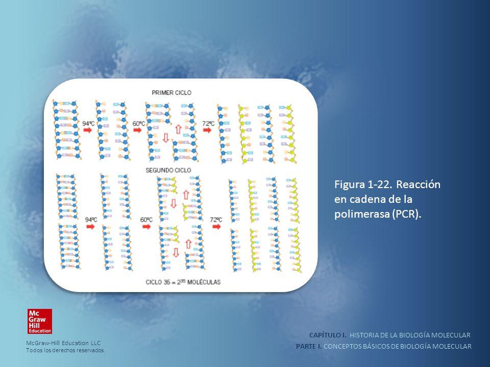 PARTE I. CONCEPTOS BÁSICOS DE BIOLOGÍA MOLECULAR CAPÍTULO I. HISTORIA DE LA BIOLOGÍA MOLECULAR Figura 1-22. Reacción en cadena de la polimerasa (PCR).