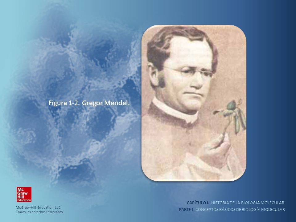 PARTE I. CONCEPTOS BÁSICOS DE BIOLOGÍA MOLECULAR CAPÍTULO I. HISTORIA DE LA BIOLOGÍA MOLECULAR Figura 1-2. Gregor Mendel. McGraw-Hill Education LLC To