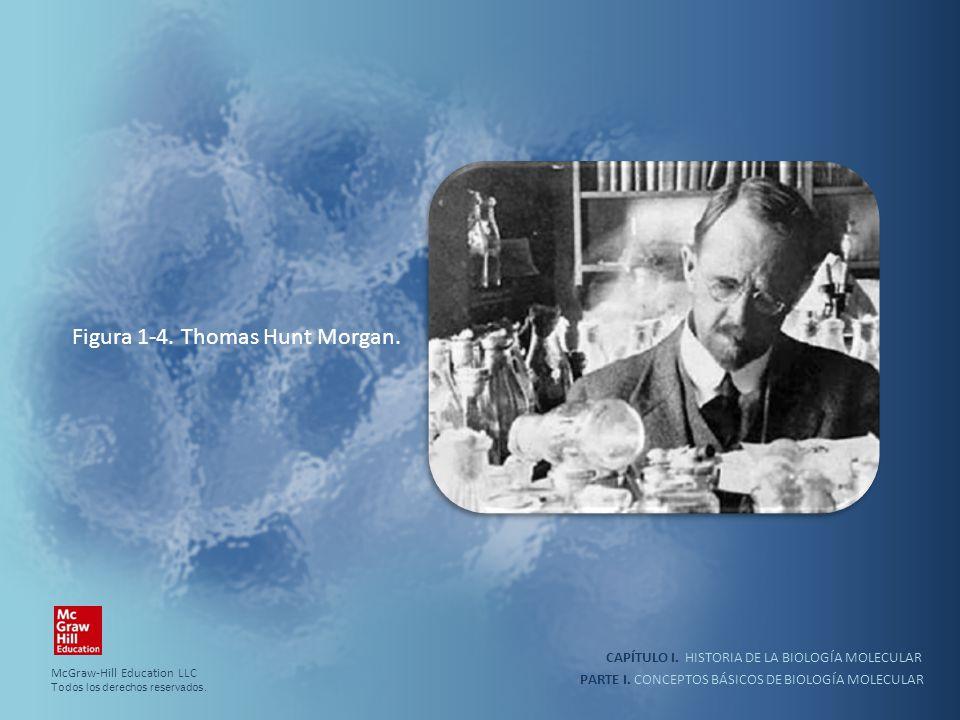 PARTE I. CONCEPTOS BÁSICOS DE BIOLOGÍA MOLECULAR CAPÍTULO I. HISTORIA DE LA BIOLOGÍA MOLECULAR Figura 1-4. Thomas Hunt Morgan. McGraw-Hill Education L