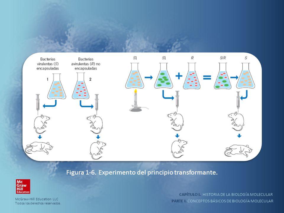 PARTE I. CONCEPTOS BÁSICOS DE BIOLOGÍA MOLECULAR CAPÍTULO I. HISTORIA DE LA BIOLOGÍA MOLECULAR Figura 1-6. Experimento del principio transformante. Mc