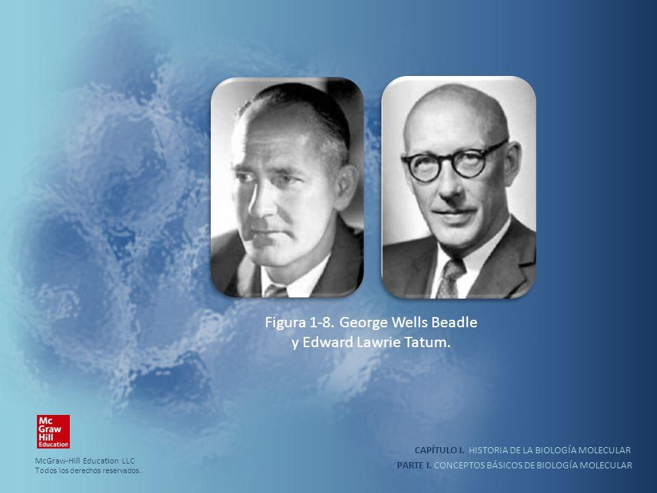 PARTE I. CONCEPTOS BÁSICOS DE BIOLOGÍA MOLECULAR CAPÍTULO I. HISTORIA DE LA BIOLOGÍA MOLECULAR Figura 1-8. George Wells Beadle y Edward Lawrie Tatum.