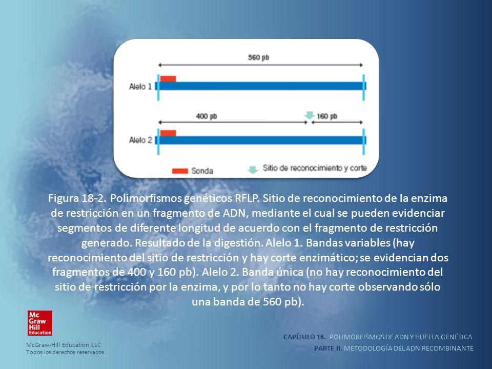 CAPÍTULO 18. POLIMORFISMOS DE ADN Y HUELLA GENÉTICA PARTE II. METODOLOGÍA DEL ADN RECOMBINANTE Figura 18-2. Polimorfismos genéticos RFLP. Sitio de rec