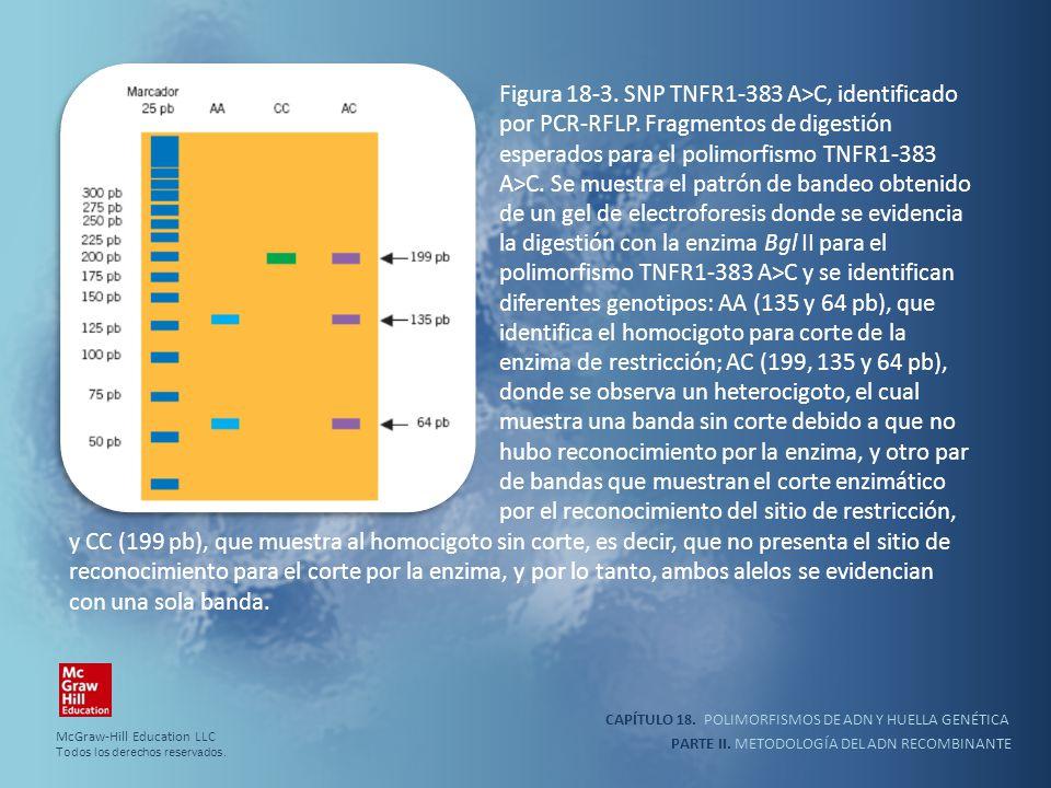 CAPÍTULO 18. POLIMORFISMOS DE ADN Y HUELLA GENÉTICA PARTE II. METODOLOGÍA DEL ADN RECOMBINANTE Figura 18-3. SNP TNFR1-383 A>C, identificado por PCR-RF