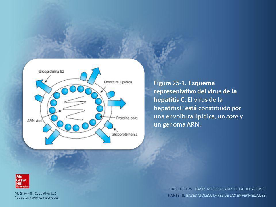 CAPÍTULO 25. BASES MOLECULARES DE LA HEPATITIS C PARTE III. BASES MOLECULARES DE LAS ENFERMEDADES Figura 25-1. Esquema representativo del virus de la