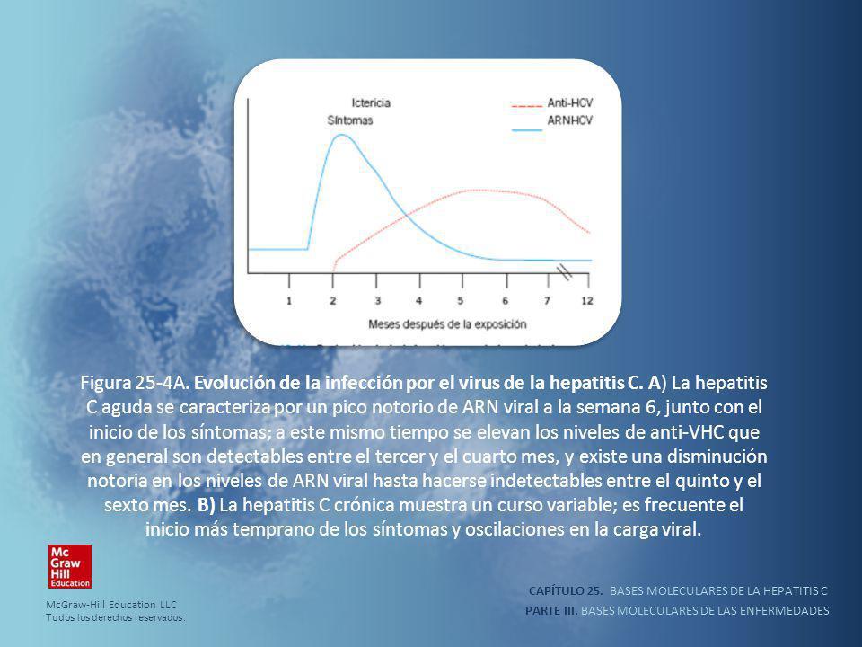 PARTE III. BASES MOLECULARES DE LAS ENFERMEDADES Figura 25-4A. Evolución de la infección por el virus de la hepatitis C. A) La hepatitis C aguda se ca