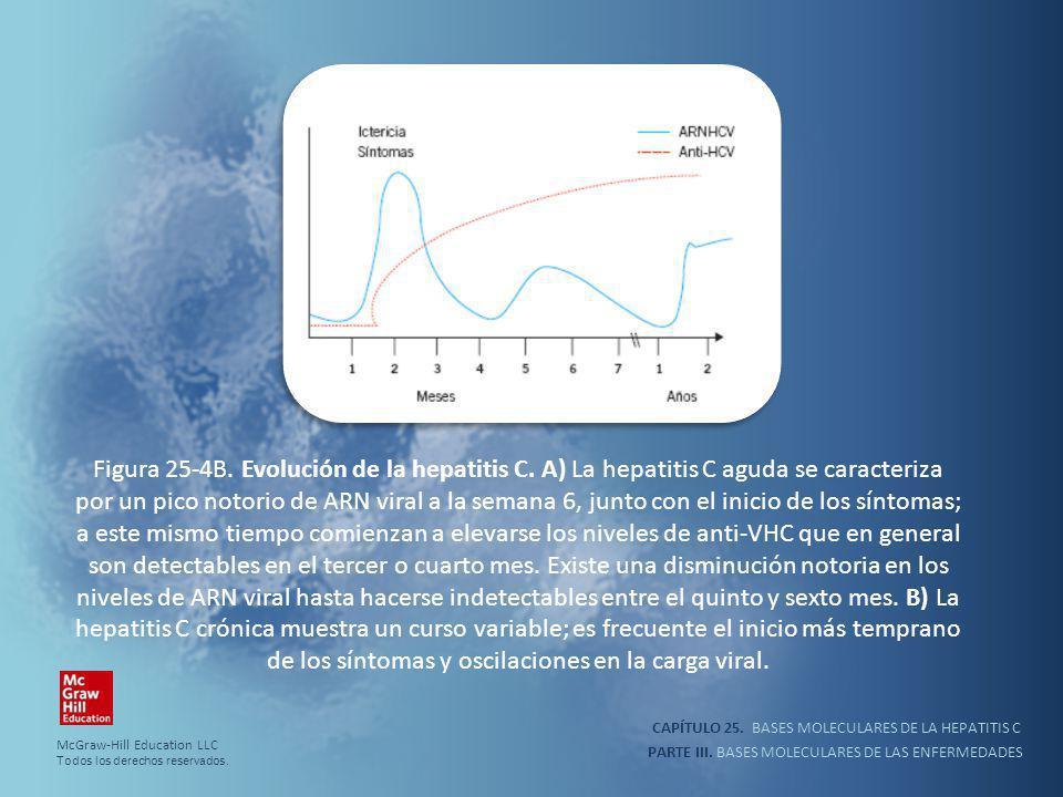 PARTE III. BASES MOLECULARES DE LAS ENFERMEDADES Figura 25-4B. Evolución de la hepatitis C. A) La hepatitis C aguda se caracteriza por un pico notorio