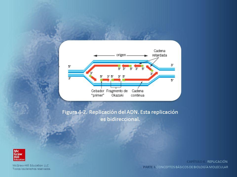 PARTE I. CONCEPTOS BÁSICOS DE BIOLOGÍA MOLECULAR CAPÍTULO 4. REPLICACIÓN Figura 4-2. Replicación del ADN. Esta replicación es bidireccional. McGraw-Hi