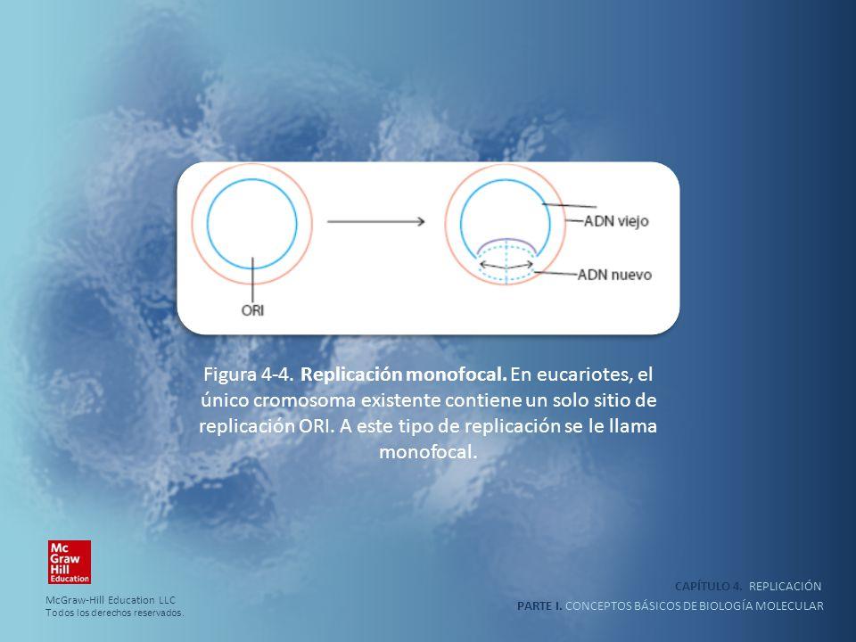 PARTE I. CONCEPTOS BÁSICOS DE BIOLOGÍA MOLECULAR CAPÍTULO 4. REPLICACIÓN Figura 4-4. Replicación monofocal. En eucariotes, el único cromosoma existent