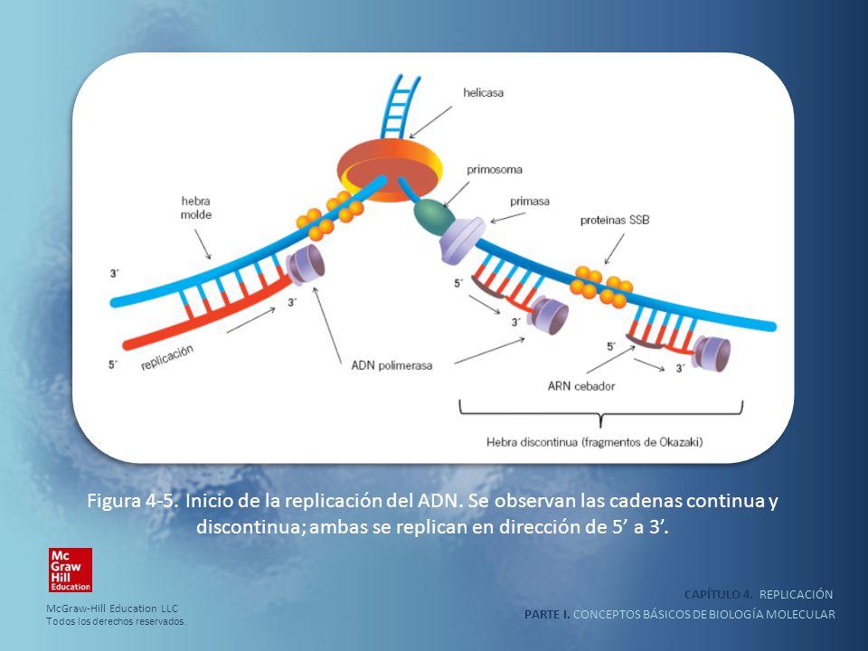 PARTE I. CONCEPTOS BÁSICOS DE BIOLOGÍA MOLECULAR CAPÍTULO 4. REPLICACIÓN Figura 4-5. Inicio de la replicación del ADN. Se observan las cadenas continu