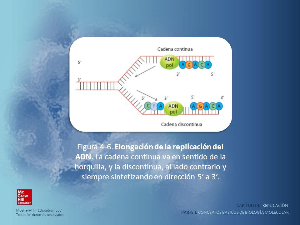 PARTE I. CONCEPTOS BÁSICOS DE BIOLOGÍA MOLECULAR CAPÍTULO 4. REPLICACIÓN Figura 4-6. Elongación de la replicación del ADN. La cadena continua va en se
