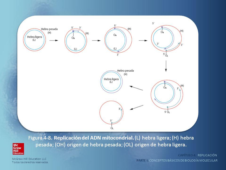 PARTE I. CONCEPTOS BÁSICOS DE BIOLOGÍA MOLECULAR CAPÍTULO 4. REPLICACIÓN Figura 4-8. Replicación del ADN mitocondrial. (L) hebra ligera; (H) hebra pes