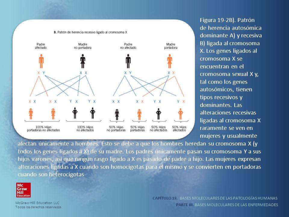 CAPÍTULO 19. BASES MOLECULARES DE LAS PATOLOGÍAS HUMANAS PARTE III. BASES MOLECULARES DE LAS ENFERMEDADES Figura 19-2B). Patrón de herencia autosómica