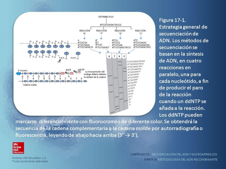 CAPÍTULO 17. SECUENCIACIÓN DEL ADN Y MICROARREGLOS PARTE II. METODOLOGÍA DEL ADN RECOMBINANTE Figura 17-1. Estrategia general de secuenciación de ADN.