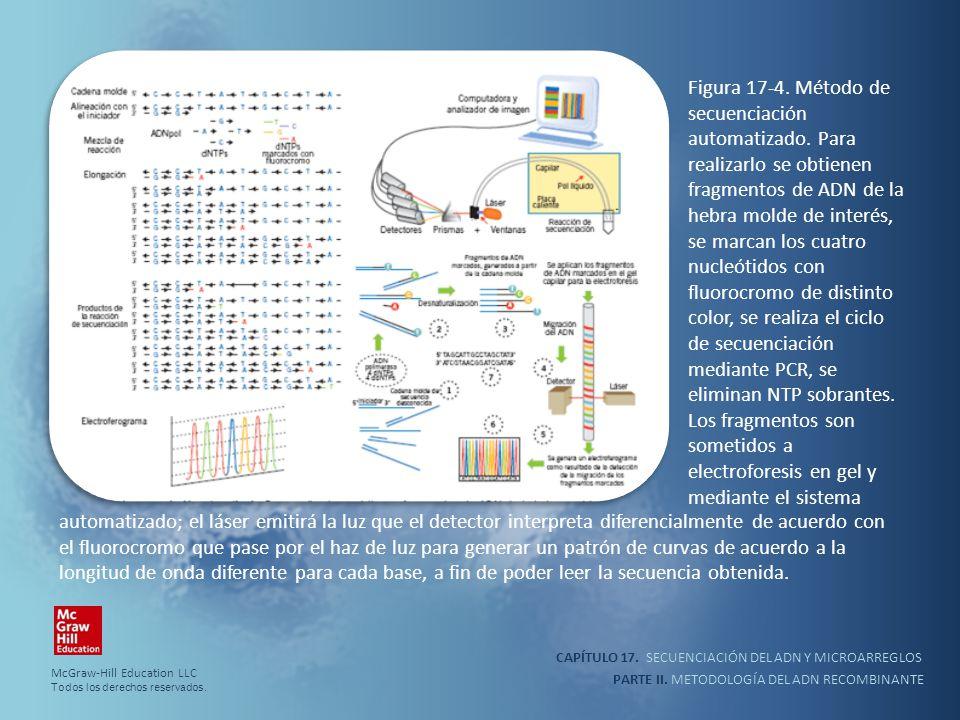 CAPÍTULO 17. SECUENCIACIÓN DEL ADN Y MICROARREGLOS PARTE II. METODOLOGÍA DEL ADN RECOMBINANTE Figura 17-4. Método de secuenciación automatizado. Para