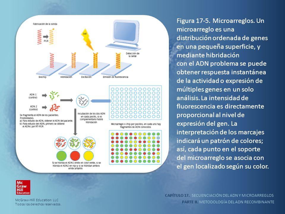 CAPÍTULO 17. SECUENCIACIÓN DEL ADN Y MICROARREGLOS PARTE II. METODOLOGÍA DEL ADN RECOMBINANTE Figura 17-5. Microarreglos. Un microarreglo es una distr