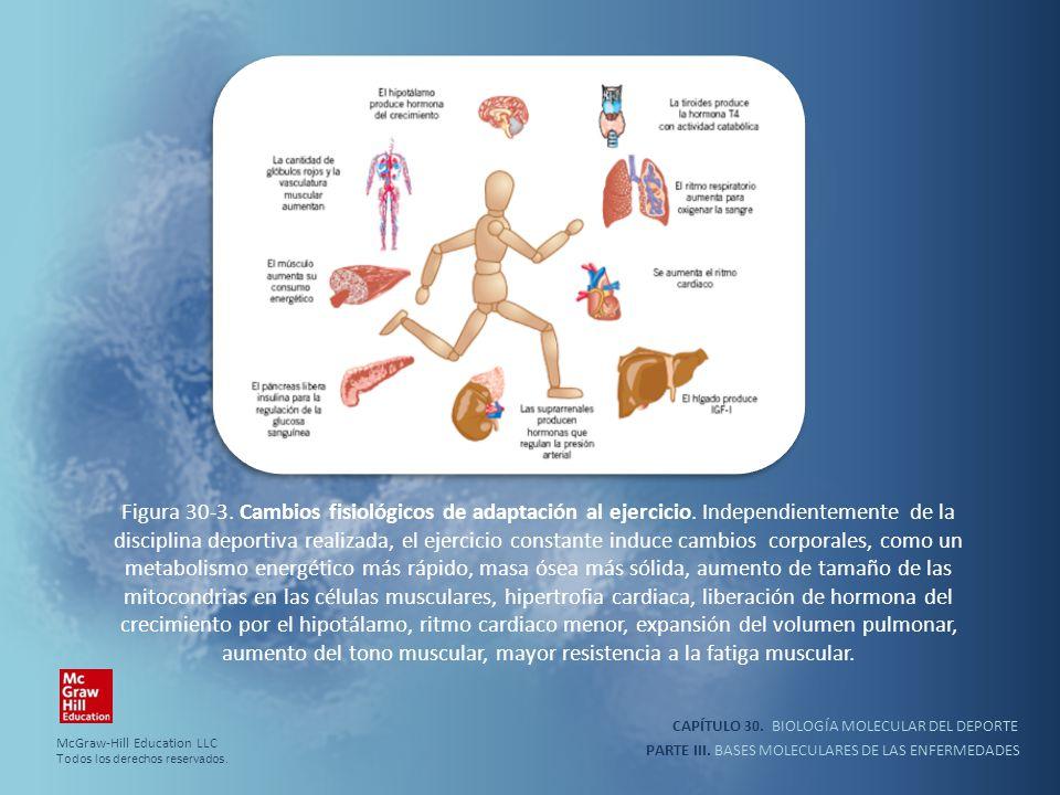 CAPÍTULO 30. BIOLOGÍA MOLECULAR DEL DEPORTE PARTE III. BASES MOLECULARES DE LAS ENFERMEDADES Figura 30-3. Cambios fisiológicos de adaptación al ejerci