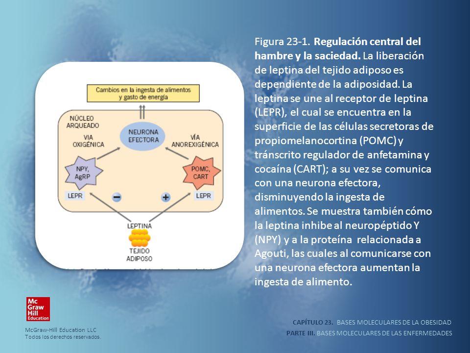CAPÍTULO 23. BASES MOLECULARES DE LA OBESIDAD PARTE III. BASES MOLECULARES DE LAS ENFERMEDADES Figura 23-1. Regulación central del hambre y la sacieda