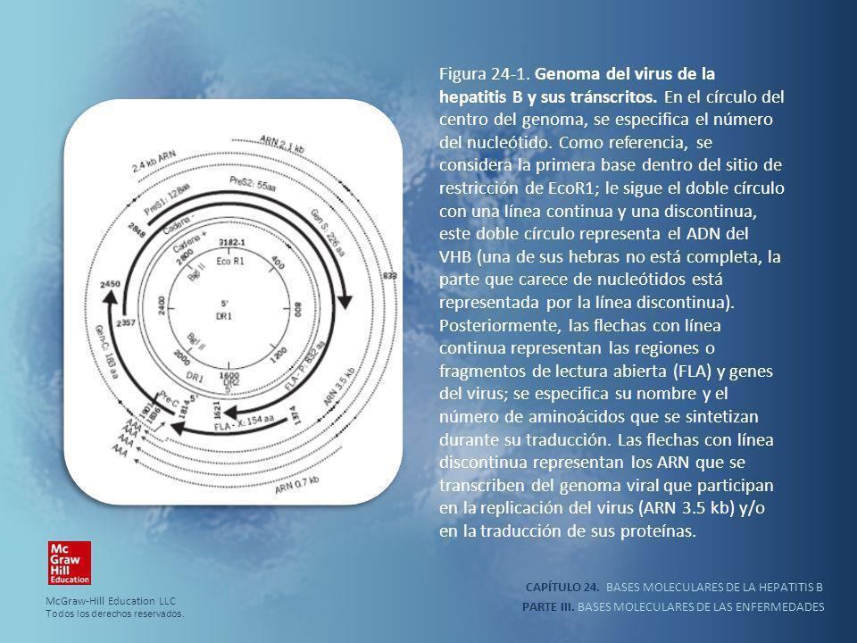 CAPÍTULO 24.BASES MOLECULARES DE LA HEPATITIS B PARTE III.