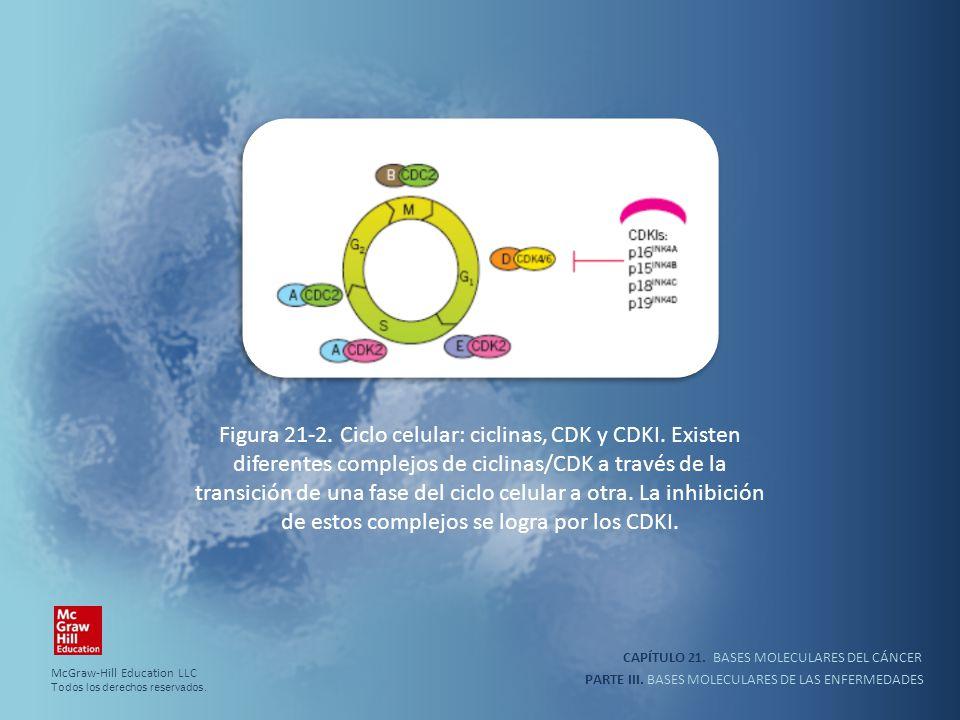 CAPÍTULO 21. BASES MOLECULARES DEL CÁNCER PARTE III. BASES MOLECULARES DE LAS ENFERMEDADES Figura 21-2. Ciclo celular: ciclinas, CDK y CDKI. Existen d