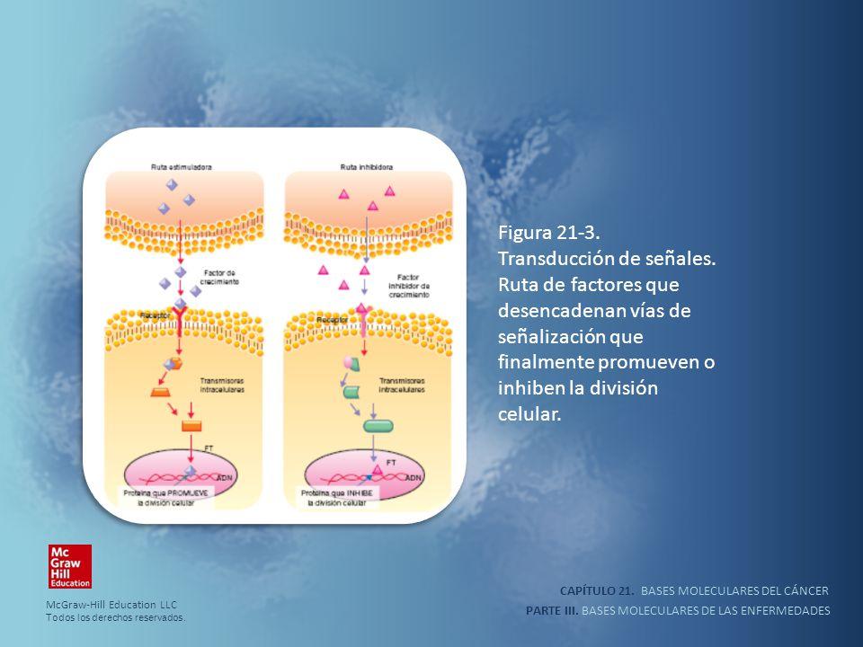 CAPÍTULO 21. BASES MOLECULARES DEL CÁNCER PARTE III. BASES MOLECULARES DE LAS ENFERMEDADES Figura 21-3. Transducción de señales. Ruta de factores que