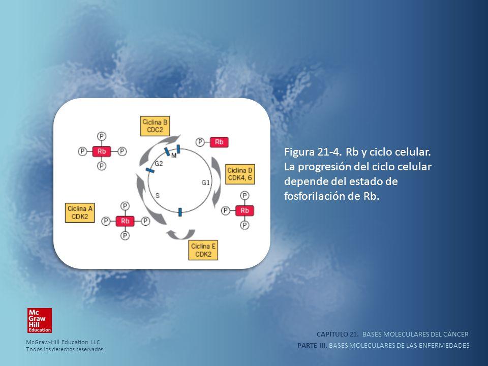 CAPÍTULO 21. BASES MOLECULARES DEL CÁNCER PARTE III. BASES MOLECULARES DE LAS ENFERMEDADES Figura 21-4. Rb y ciclo celular. La progresión del ciclo ce