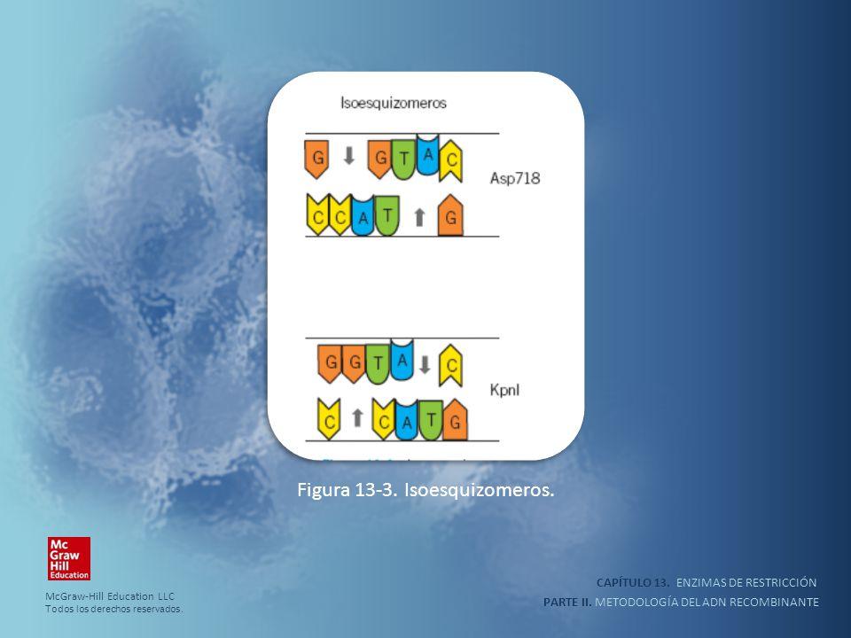 CAPÍTULO 13. ENZIMAS DE RESTRICCIÓN PARTE II. METODOLOGÍA DEL ADN RECOMBINANTE Figura 13-3. Isoesquizomeros. McGraw-Hill Education LLC Todos los derec