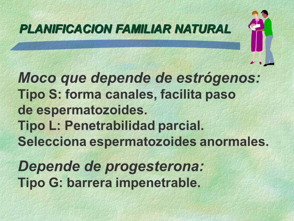 PLANIFICACION FAMILIAR NATURAL Moco que depende de estrógenos: Tipo S: forma canales, facilita paso de espermatozoides. Tipo L: Penetrabilidad parcial