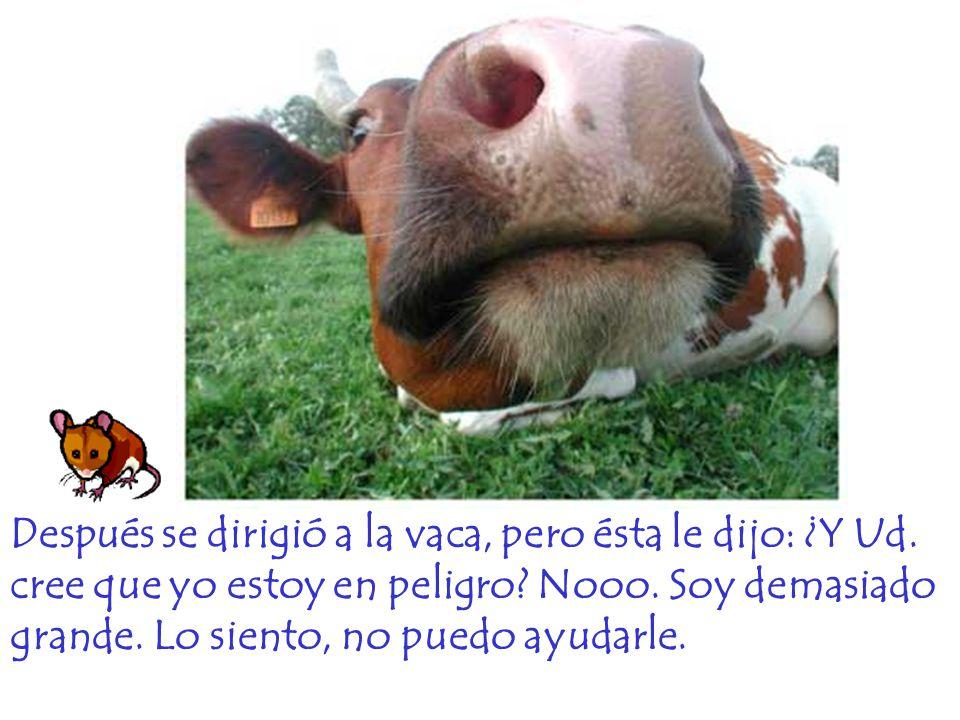Después se dirigió a la vaca, pero ésta le dijo: ¿Y Ud. cree que yo estoy en peligro? Nooo. Soy demasiado grande. Lo siento, no puedo ayudarle.