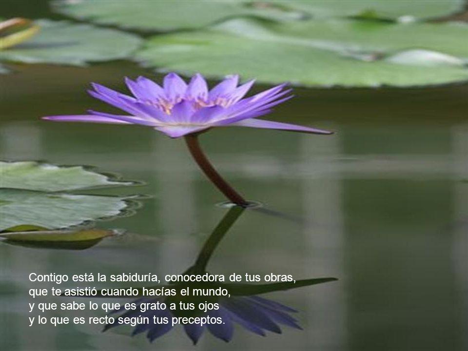 Contigo está la sabiduría, conocedora de tus obras, que te asistió cuando hacías el mundo, y que sabe lo que es grato a tus ojos y lo que es recto según tus preceptos.
