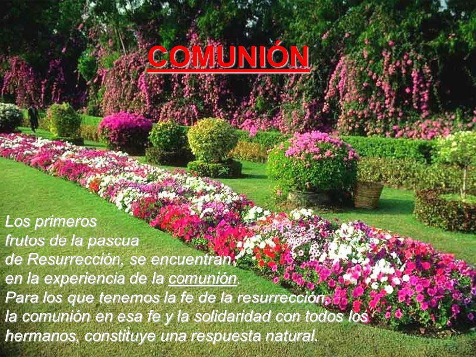 Los primeros frutos de la pascua de Resurrección, se encuentran en la experiencia de la comunión.