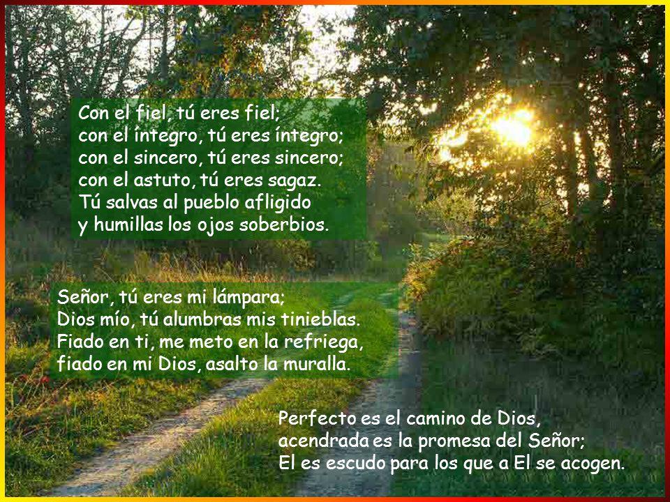 y no me aparté de sus preceptos; le fui enteramente fiel, guardándome de toda culpa; el Señor retribuyó mi justicia, la pureza de mis manos en su pres