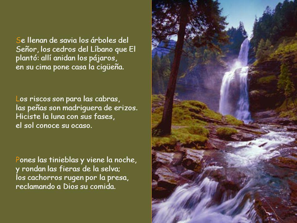De los manantiales sacas los ríos, para que fluyan entre los montes; en ellos beben las fieras de los campos, el asno salvaje apaga su sed; junto a el