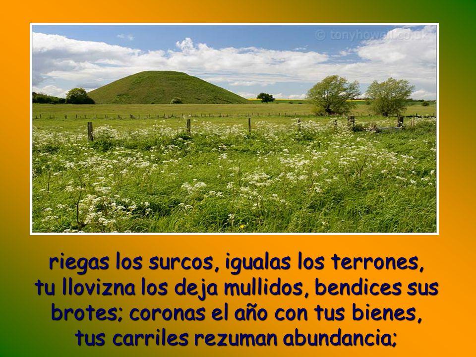 Tú cuidas la tierra, la riegas y la enriqueces sin medida; la acequia de Dios va llena de agua, preparas los trigales;