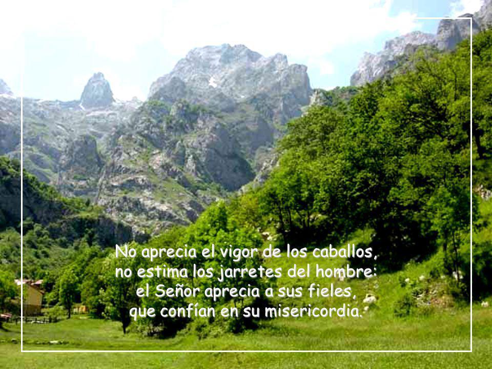 que hace brotar hierba en los montes, para los que sirven al hombre; que da su alimento al ganado y a las crías de cuervo que graznan.