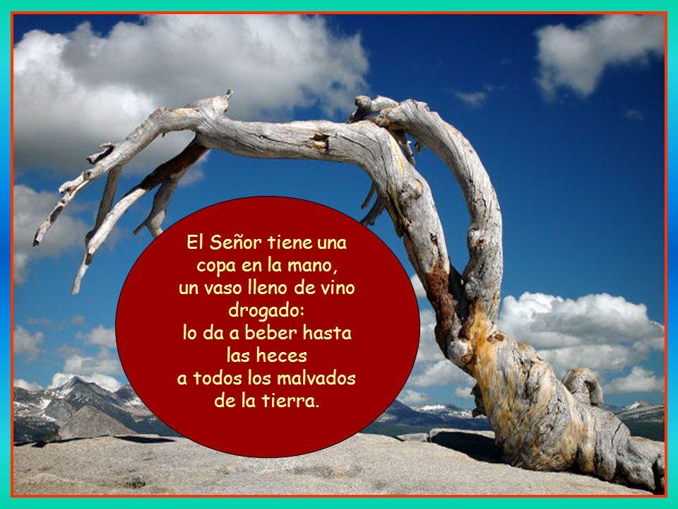 Ni del oriente ni del occidente, ni del desierto ni de los montes, sólo Dios gobierna: a uno humilla, a otro ensalza.