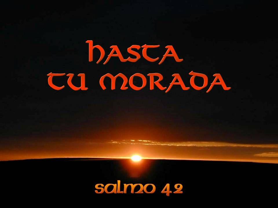 S eñor Dios, acompáñanos en esta gran peregrinación de la vida, haznos sentir el dolor de la ausencia y pon en nuestros corazones la esperanza del encuentro.