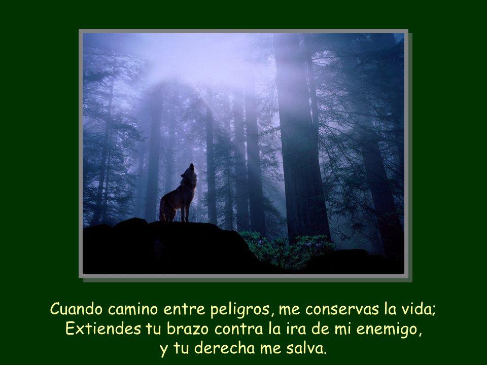 Cuando camino entre peligros, me conservas la vida; Extiendes tu brazo contra la ira de mi enemigo, y tu derecha me salva.