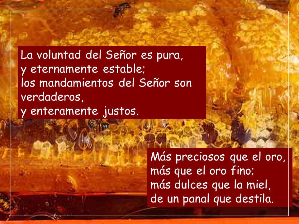 La ley del Señor es perfecta, y es descanso del alma; el precepto del Señor es fiel, e instruye al ignorante. Los mandatos del Señor son rectos, y ale