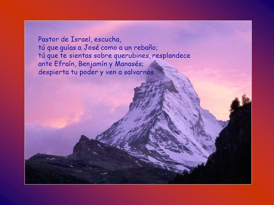 Pastor de Israel, escucha, tú que guías a José como a un rebaño; tú que te sientas sobre querubines, resplandece ante Efraín, Benjamín y Manasés; despierta tu poder y ven a salvarnos.
