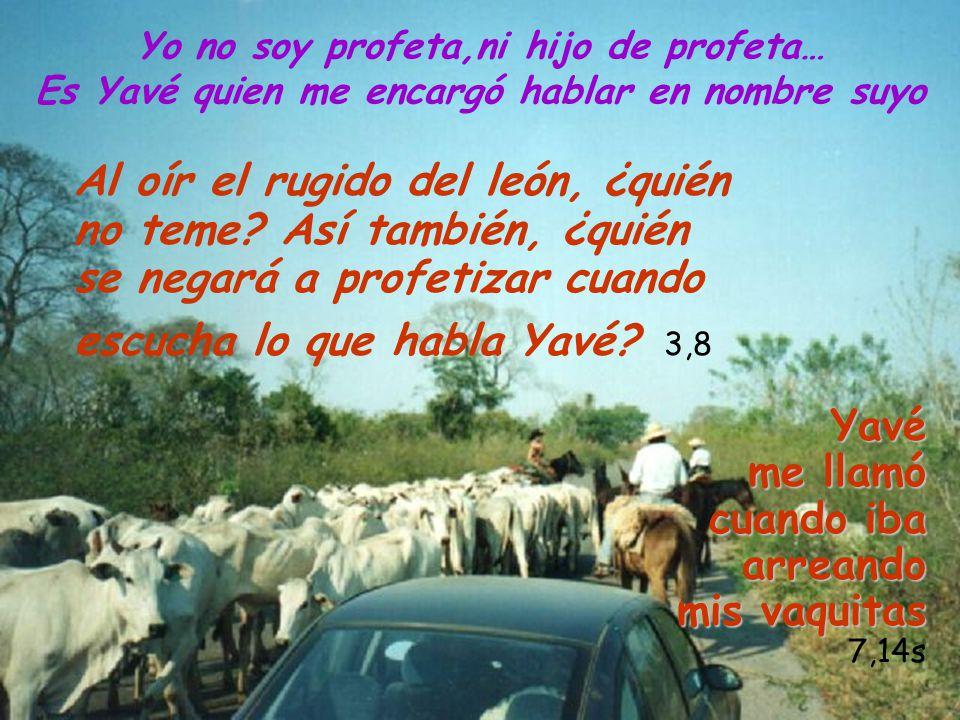 Yo no soy profeta,ni hijo de profeta… Es Yavé quien me encargó hablar en nombre suyoYavé me llamó cuando iba arreando mis vaquitas 7,14s Al oír el rug