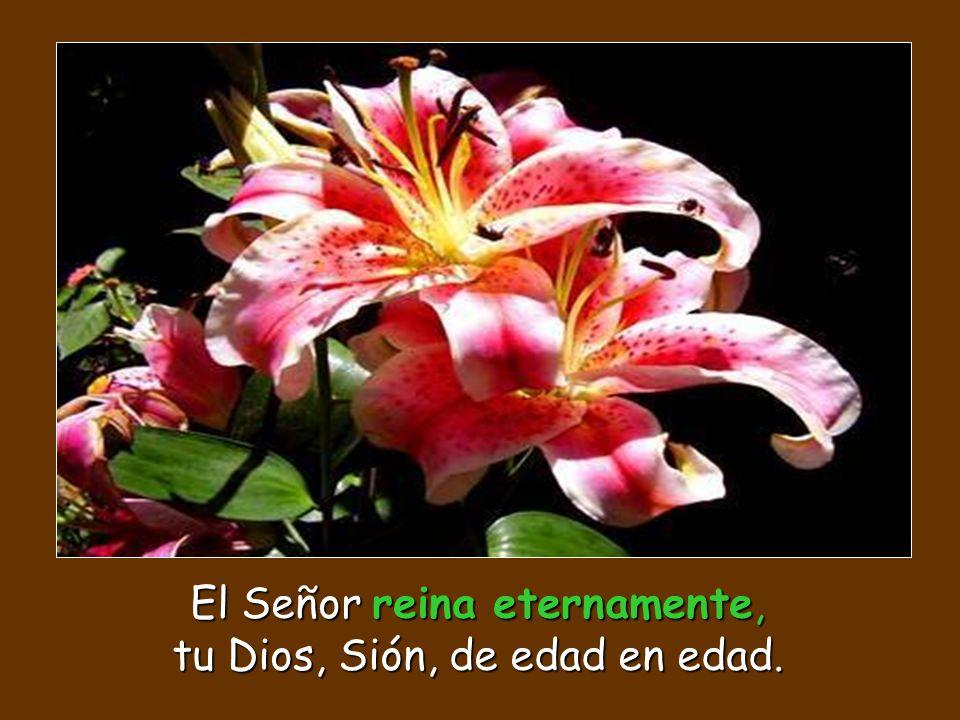 El Señor guarda a los peregrinos, sustenta al huérfano y a la viuda y trastorna el camino de los malvados.