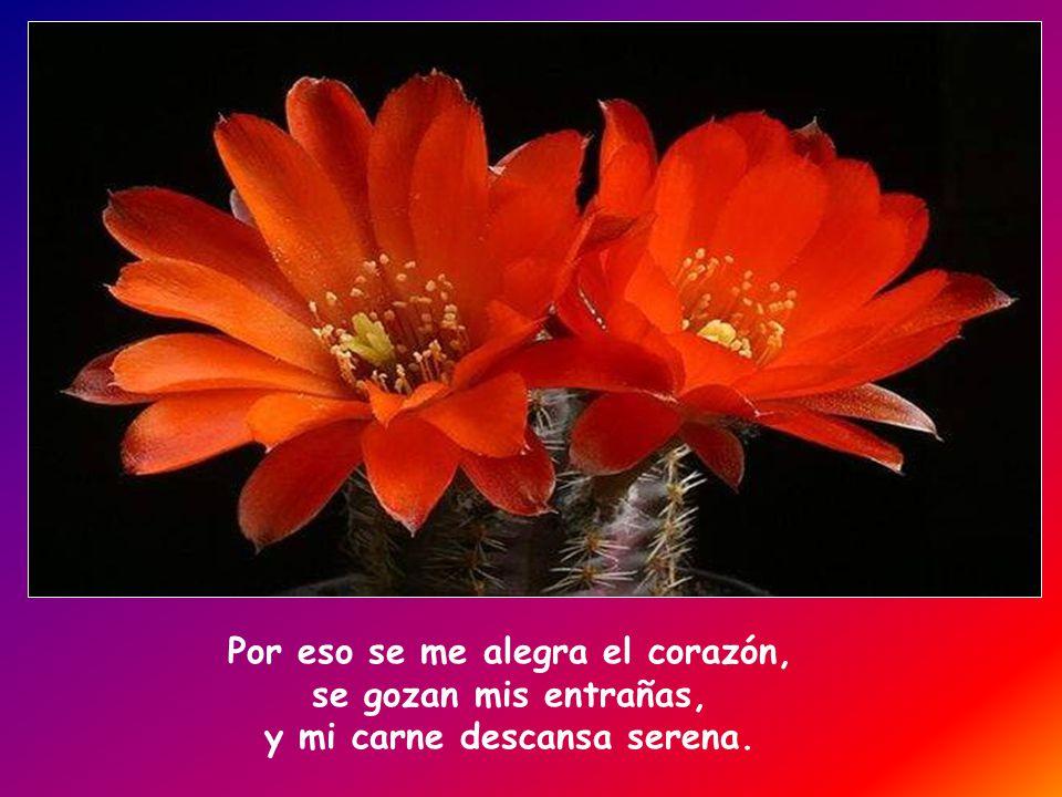 Bendeciré al Señor, que me aconseja, hasta de noche me instruye internamente. Tengo siempre presente al Señor, con él a mi derecha no vacilaré.