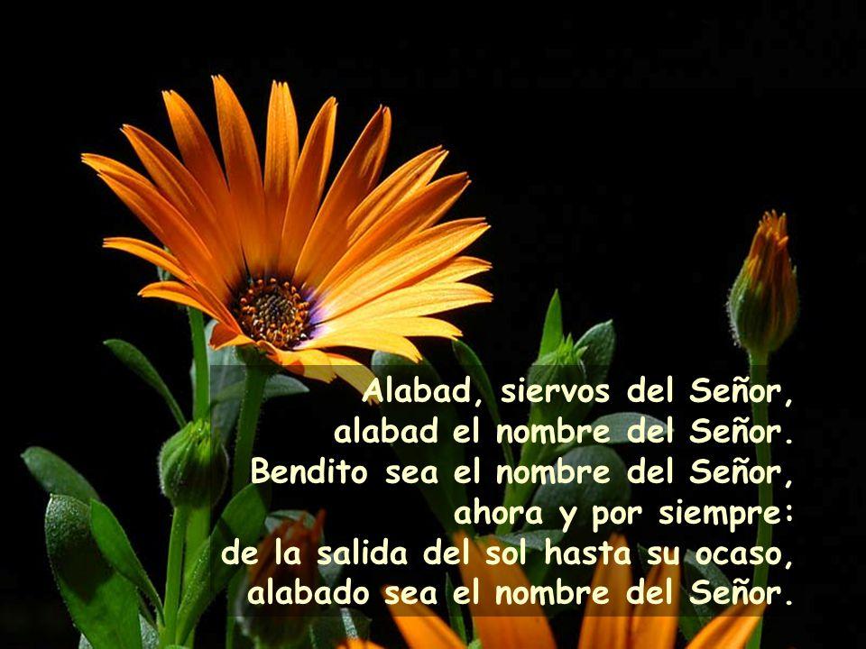 Alabad, siervos del Señor, alabad el nombre del Señor.