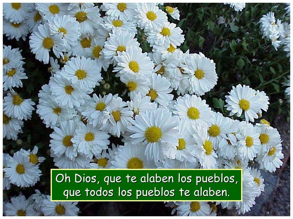 Que canten de alegría las naciones, porque riges el mundo con justicia, riges los pueblos con rectitud y gobiernas las naciones de la tierra.