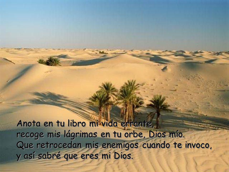 Anota en tu libro mi vida errante, recoge mis lágrimas en tu orbe, Dios mío.