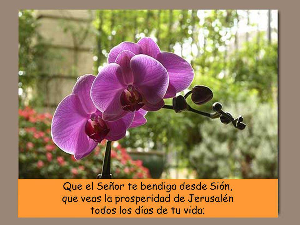 Que el Señor te bendiga desde Sión, que veas la prosperidad de Jerusalén todos los días de tu vida;