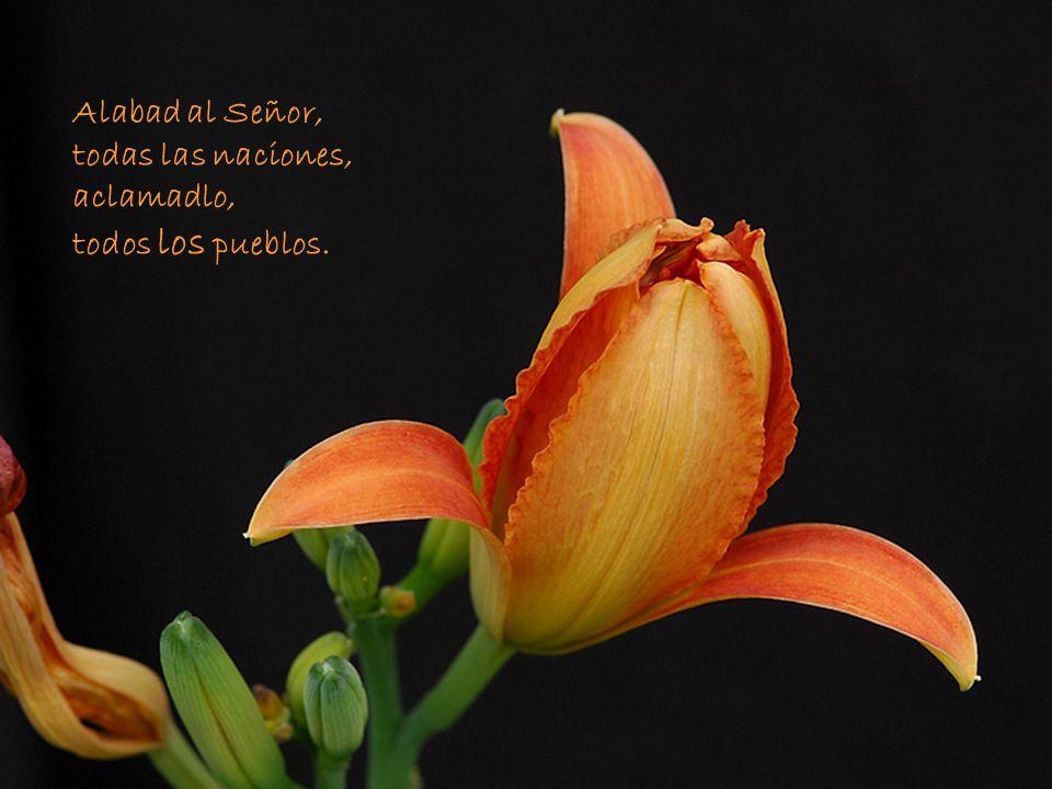 Alabad al Señor, todas las naciones, aclamadlo, todos los pueblos.