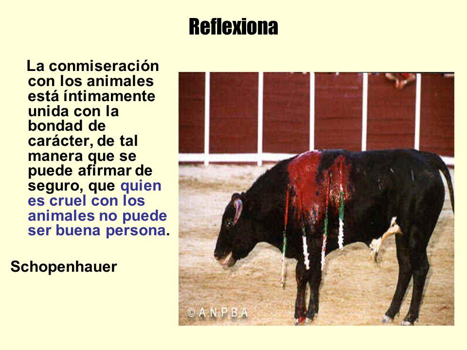 Reflexiona La conmiseración con los animales está íntimamente unida con la bondad de carácter, de tal manera que se puede afirmar de seguro, que quien