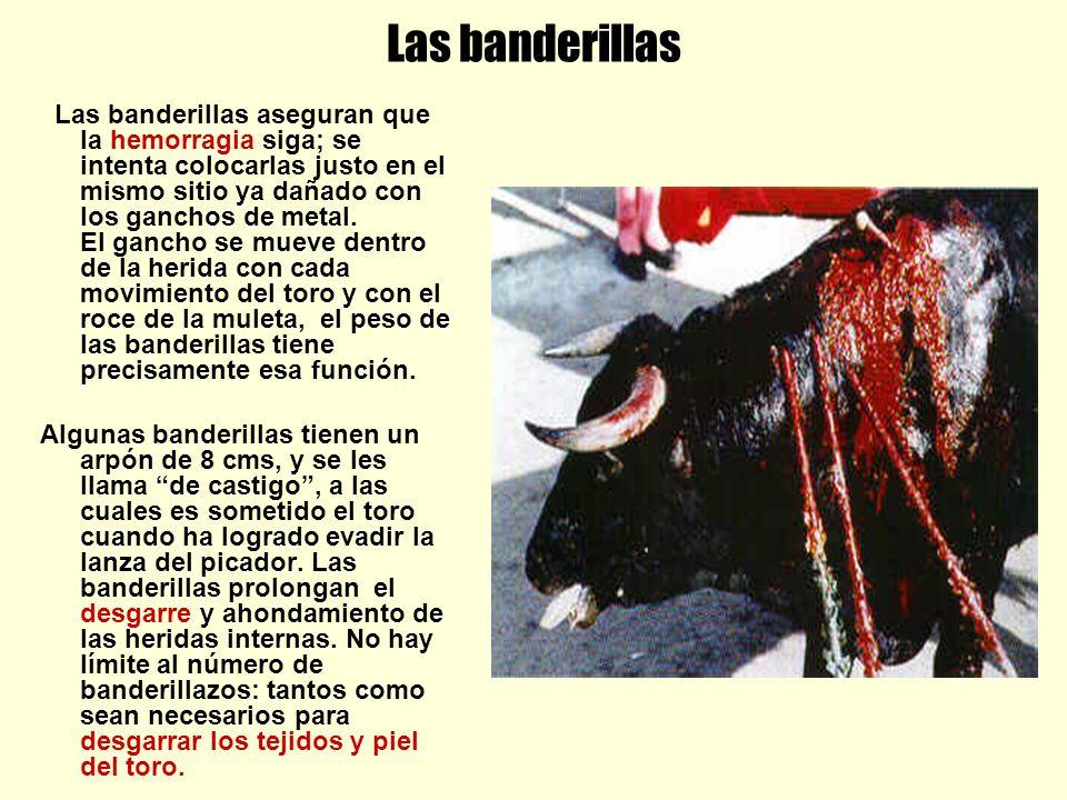 Las banderillas Las banderillas aseguran que la hemorragia siga; se intenta colocarlas justo en el mismo sitio ya dañado con los ganchos de metal. El